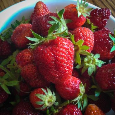 Strawberrry Days